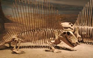 Предыдущие хозяева мира. Точки где ищут кости динозавров — обзор
