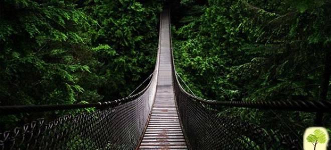 Мост Капилано, Канада — обзор