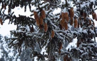 Пейзе-Валландри — обзор и отзывы лыжного курорта Франции