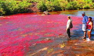 Река Каньо-Кристиалес, Колумбия — обзор