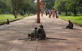Талпе — что посмотреть по городам Шри-Ланки