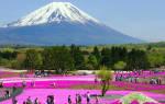 Парк цветов «Асикага», Япония — обзор