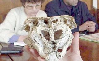 Родопский череп, Болгария — обзор