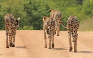 Трансграничный парк Лимпопо, Южная Африка — обзор