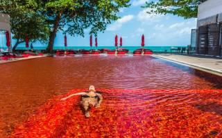 Бассейн на пляже Nandana Villas, Багамские Острова — обзор