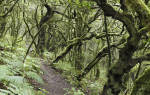 Национальный парк Гарахонай, Испания — обзор