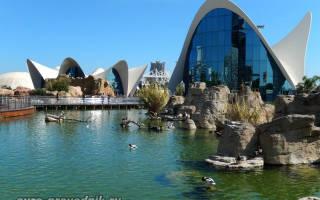 Океанографический парк Валенсии, Испания — обзор
