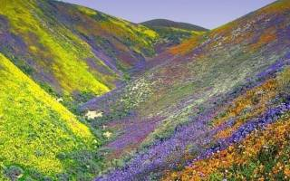 Национальный парк «Долина цветов», Индия — обзор
