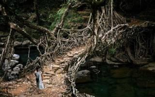Фото галерея: Необычные и странные мосты мира — обзор