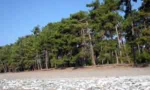 Абхазия что посмотреть в Лдзаа