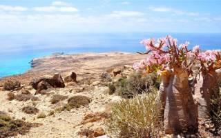 Острова Сокотра, Йемен — обзор