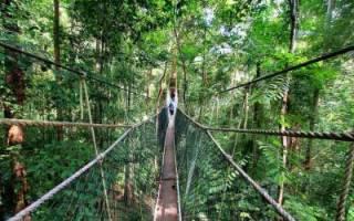 Мост Котмэйл Оя, Шри Ланка — обзор