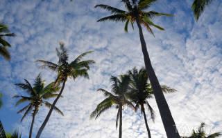 Фиджи — обзор и отзывы для туриста