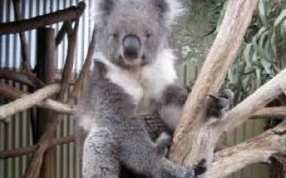 Австралия что посмотреть Остров Кенгуру