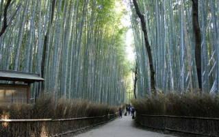 Бамбуковая роща Сагано, Япония — обзор