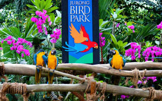 Парк птиц Джуронг, Сингапур — обзор