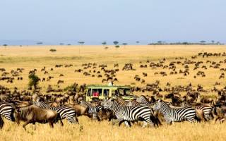 Национальный парк Серенгети, Танзания — обзор