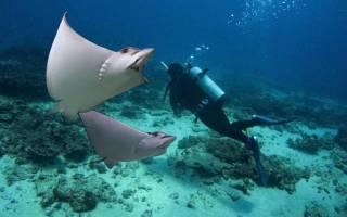 Австралия что посмотреть Остров Гамильтон