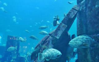 Океанариум Дип, Англия — обзор