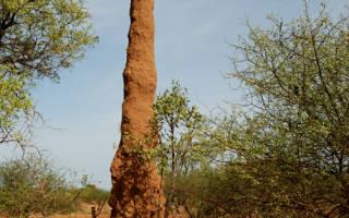 Племя Каро, Эфиопия — обзор