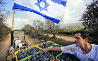 Кибуц Тират-Цви, Израиль — обзор